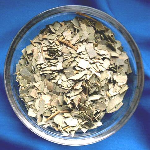 Eukalyptus Blätter